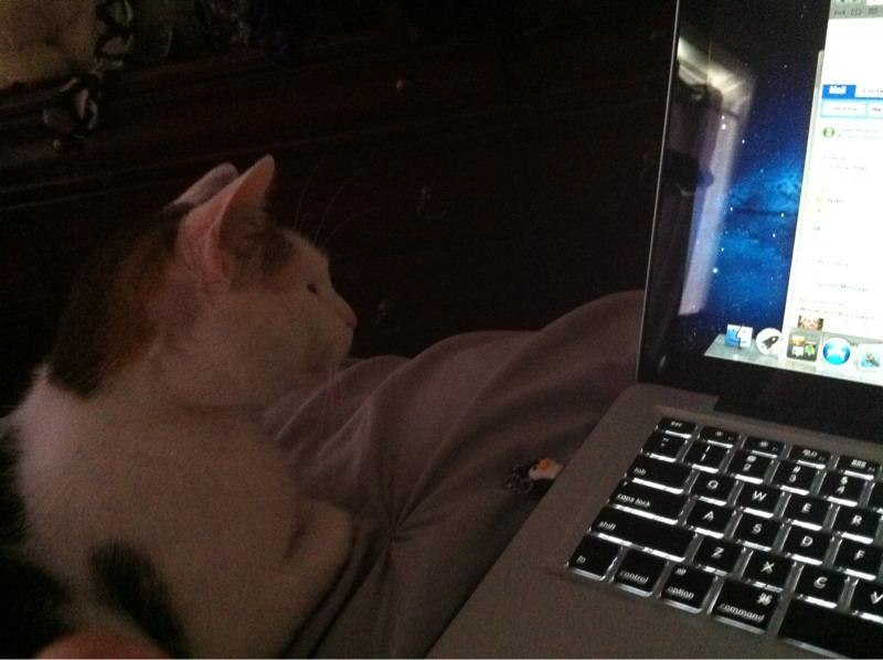 Will Dramamine Make My Cat Sleep